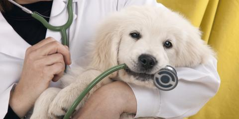 Veterinarian Shows 5 Benefits Of Having Pets, Florence, Kentucky