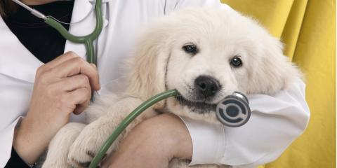 5 Questions You Should Ask Your Veterinarian, Avon, Ohio