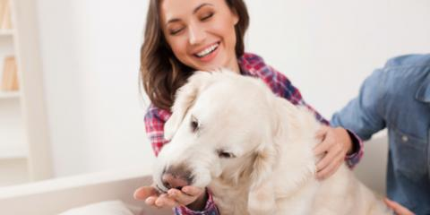 3 Reasons Pet Owners Should Hire a Cleaning Service , Norwood, Ohio