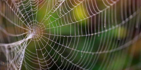 Are the Spiders in Your Home Dangerous?, Sutter Creek, California