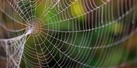 Dangerous & Harmless Spider Varieties Found in Ohio & Kentucky, Hamilton, Ohio