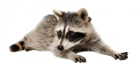 Animal Control Experts of 3 Tips for Keeping Wildlife Out of Your Home f, Springfield, Ohio