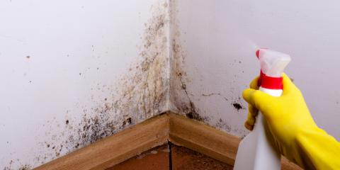 3 Common Causes of Household Mold, Red Wing, Minnesota