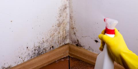 FAQ About Mold Removal , Fairfax, Ohio