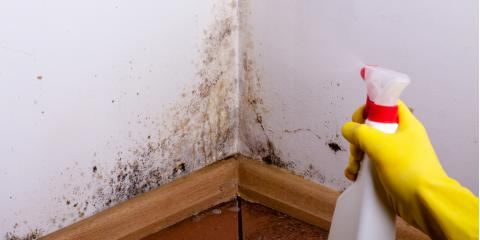 3 Signs That Your Home Needs Immediate Mold Remediation, Stevens Creek, Nebraska