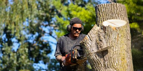 3 Steps to Take Before Getting Tree Removal , Hilo, Hawaii