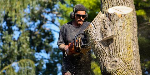 Why Tree Removal Isn't a DIY Project, Scottsville, New York