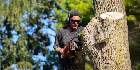 3 Reasons for Emergency Tree Removal, Miamitown, Ohio
