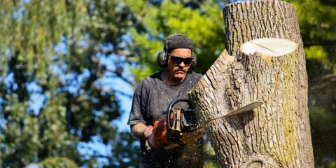 3 Signs You Need Tree Removal, Grand Rapids, Wisconsin