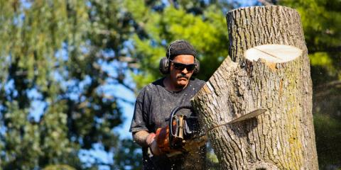 4 Ways to Know It's Time to Cut Down Your Tree, Center City, Minnesota