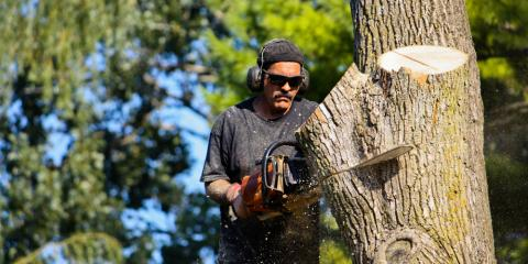 Wisconsin Tree Service Company Reveals the Most Dangerous Trees in the World, Holland, Wisconsin