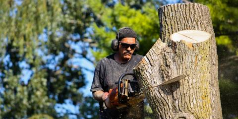 What Is an Arborist & Why Do You Need One? , Commerce, Georgia