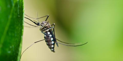 Pest Control Experts Share 3 Tips for Keeping Mosquitoes Away From Your Yard, Lodi, California