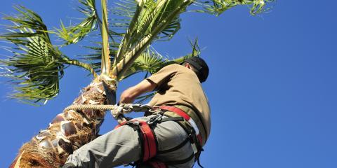 How to Improve the Health of Your Trees, Ewa, Hawaii