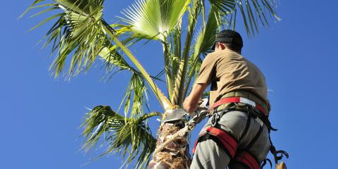 Understanding Thinning & Topping When It Comes to Tree Pruning, Honolulu, Hawaii