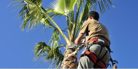 3 Questions to Ask When Looking for an Arborist, Honolulu, Hawaii