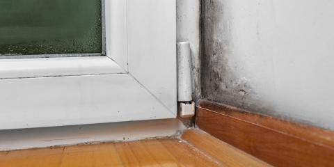 What Types of Mold Should You Be Worried About at Home?, Texarkana, Texas
