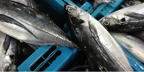 3 Ways the HACCP Program Makes Seafood Safer, Honolulu, Hawaii