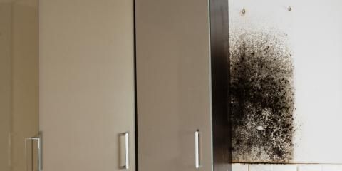 Top 3 Health Risks of Mold in Your House, Sharonville, Ohio