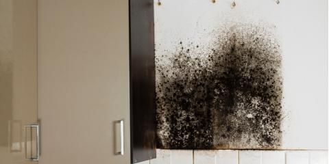 Why You Shouldn't Perform Mold Removal Yourself, Springdale, Ohio
