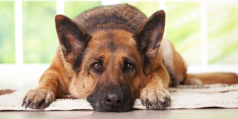 3 Signs Your Senior Pet May Have Arthritis, Clark, Missouri