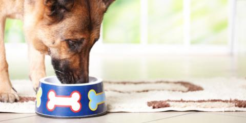 A Veterinarian Explains 3 Easy Ways to Improve Your Dog's Diet, Honolulu, Hawaii
