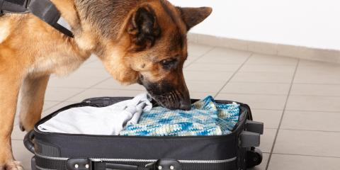 Do's & Don'ts of Traveling With a Pet , San Marcos, Texas