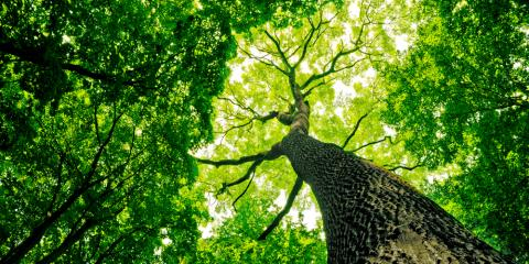 1st Class Tree Service, Tree Service, Services, Middletown, Ohio