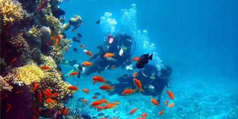 Does Snorkeling Offer the Same Kind of Experience as Scuba Diving?, Honolulu, Hawaii