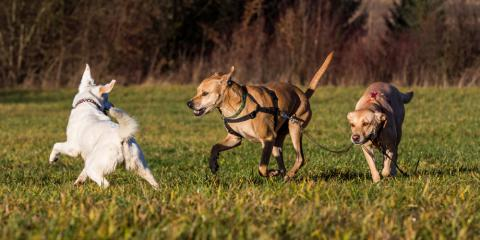 Why Pet Boarding Is Essential During Your Vacation, Prairie du Chien, Wisconsin