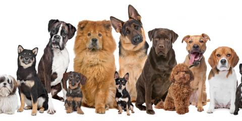 The Best Pet Care Flea and Heartworm Preventatives, Sanford, North Carolina