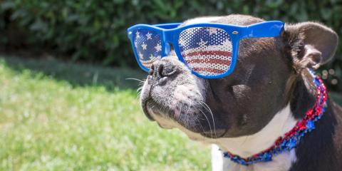 Why Pet Hospitals Encourage Microchipping Before the 4th of July, Ewa, Hawaii