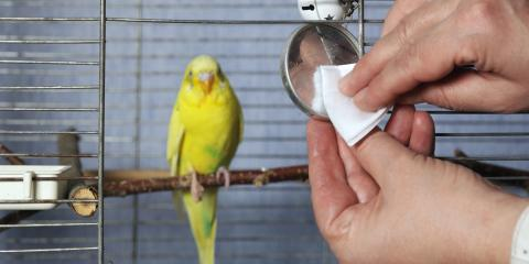 How to Care For Your Pet Bird, Honolulu, Hawaii