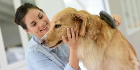 4 FAQ About Dog Grooming at Home, Fairbanks North Star, Alaska