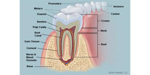Get to know your teeth and the different functions that they have, Manhattan, New York
