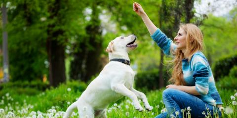 Who Will Get Custody of the Pets if I File for Divorce?, London, Kentucky