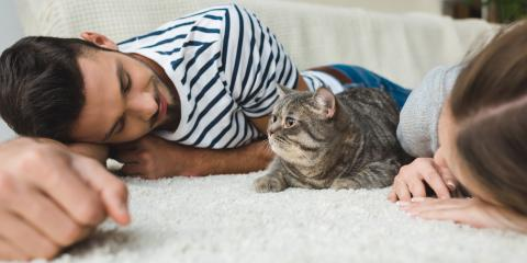 What Happens to Family Pets During Divorce?, Honolulu, Hawaii