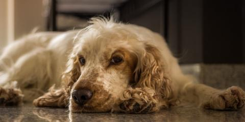 4 Solutions for Puppy Acne Explained by Veterinary Dermatology Services in Cincinnati, Sharonville, Ohio