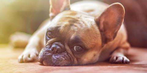 Walton's Premier Dog Boarding Center Shares 3 Tips to Battle Pet Anxiety, Piner-Visalia, Kentucky