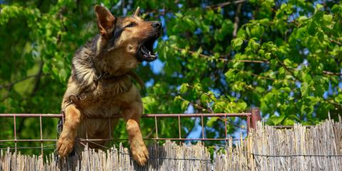 What to Do If You Encounter an Aggressive Dog, Sparta, Wisconsin