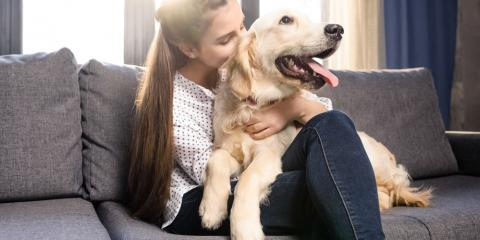 What Every Dog Owner Needs to Know About Kennel Cough, High Point, North Carolina