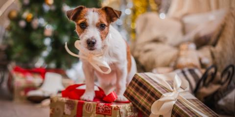 Give Your Pooches a Holiday Vacation with Dog Boarding, Keaau-Mountain View, Hawaii