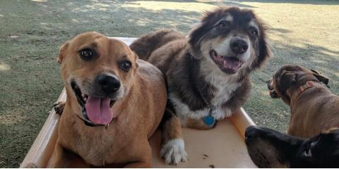 3 Situations When You Should Board Your Dog, McKinney, Texas