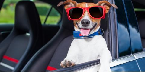 3 Essential Steps Before a Dog Boarding Stay, McKinney, Texas