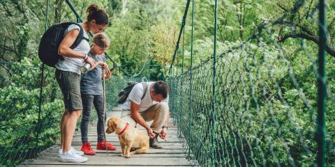 FAQ: How to Select a New Dog Collar, Jacksonville East, Florida