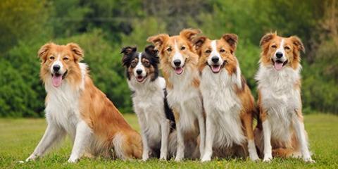 South Florida Pet Sitter Explains the Benefits of Dog Day Care, Sunrise, Florida