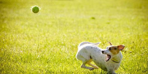 3 Reasons to Send Your Pooch to Dog Daycare, Sunrise, Florida
