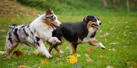 5 Guidelines of a Quality Dog Day Care, Avon, Ohio