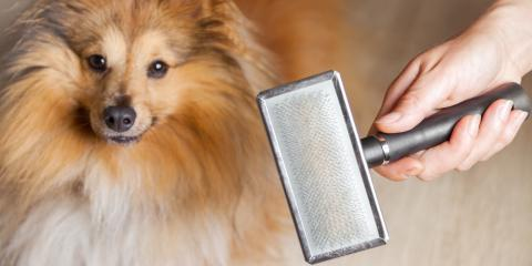 Dog Grooming Experts Discuss Excessive Shedding , Newport-Fort Thomas, Kentucky
