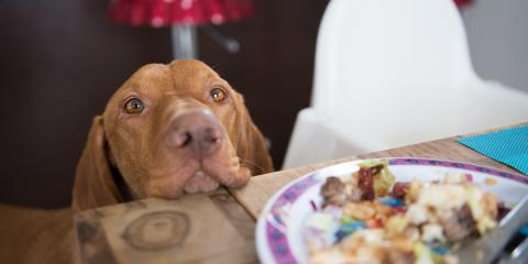 Is It Safe to Feed Your Dog Thanksgiving Food?, Mililani Mauka, Hawaii